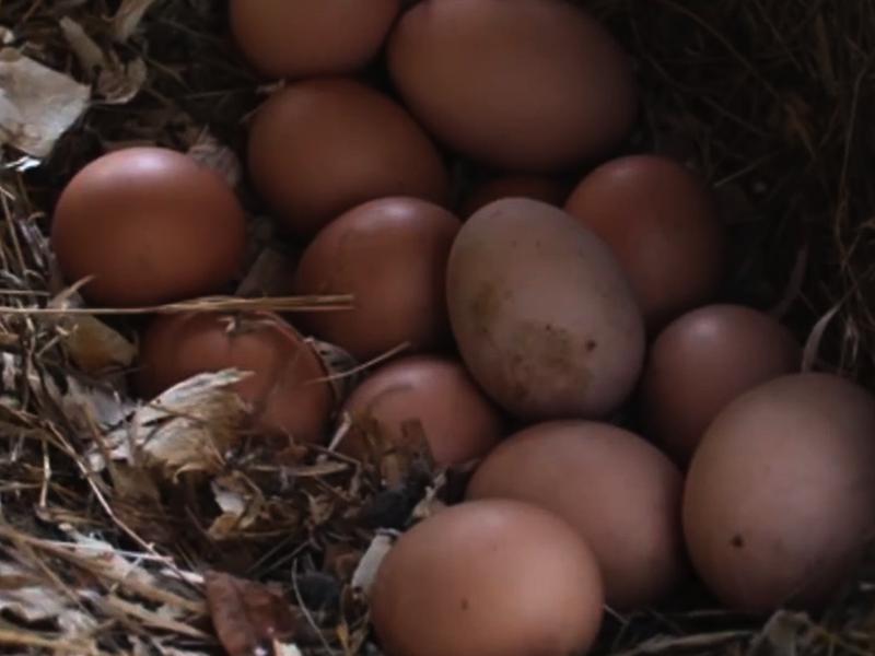 Perfect Hard Boiled Eggs Recipe